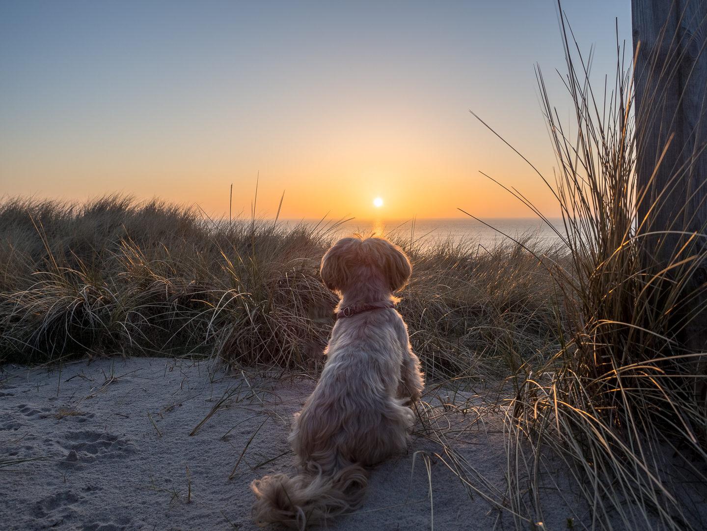 Sylt Urlaub mit Hund