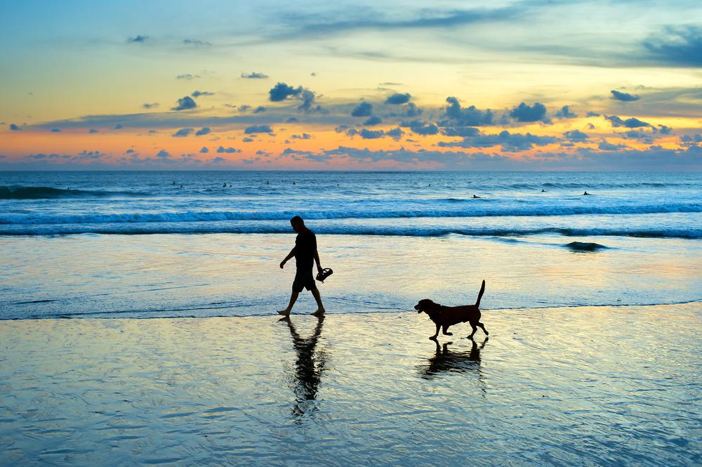 Urlaub auf Sylt mit Hund